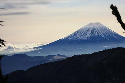 富士山は木の間から